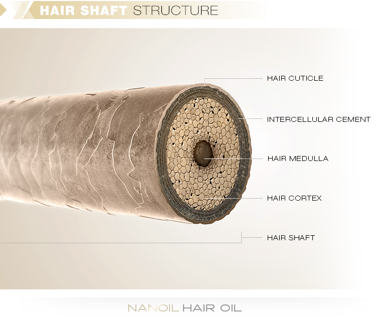 Hair shaft structure